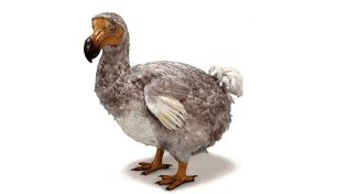 dodo-model-news-two-column.jpg